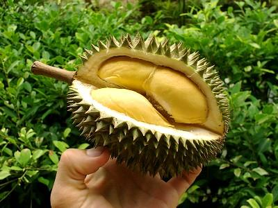 Durian-Fruit-Yellow-Pulps